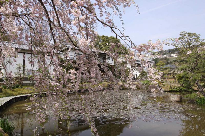 桜_convert_20120510210214