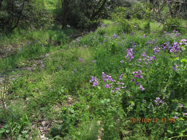 相生山の花園
