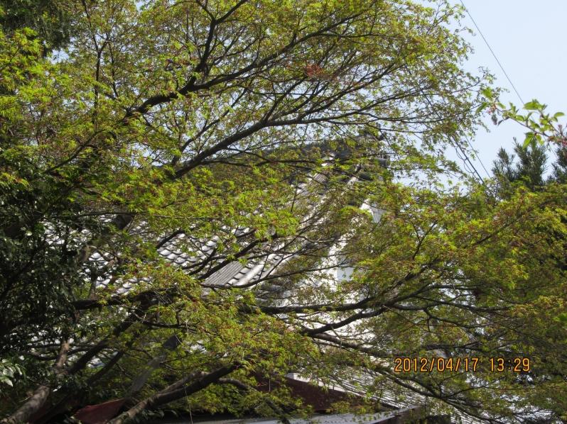 名古屋の嵐山