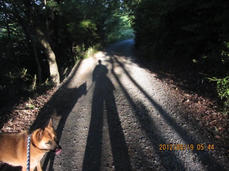 早朝の散歩