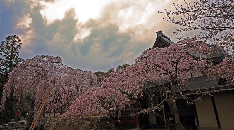 氷室神社夕景