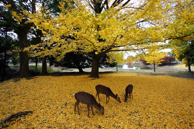 大仏池:黄色いじゅうたんの上で…