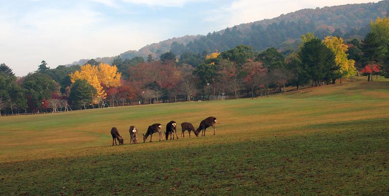C奈良公園