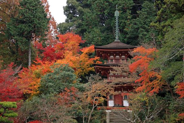 20浄瑠璃寺