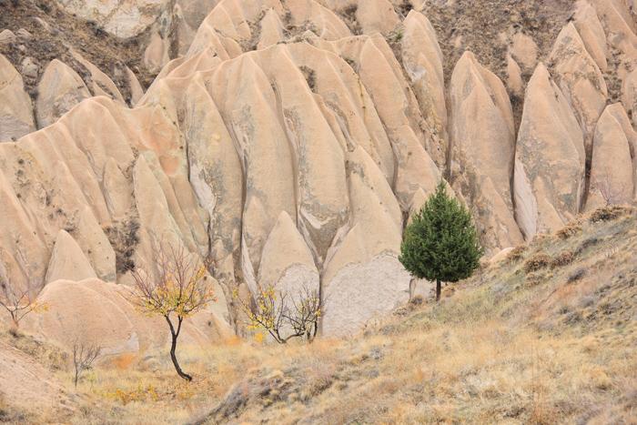 44一本の木