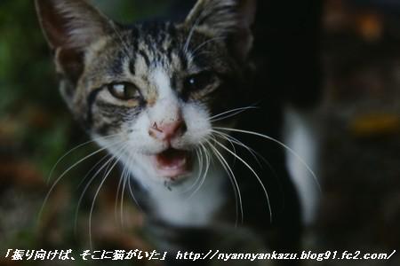 06 08 20 (4)_blog