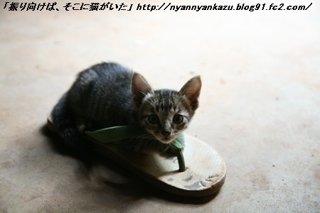 IMG_9485_blog.jpg