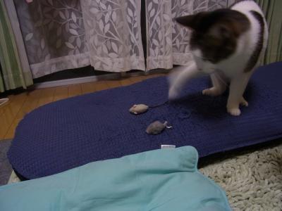 ネズミ6縮小