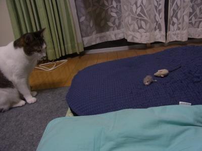 ネズミ4縮小