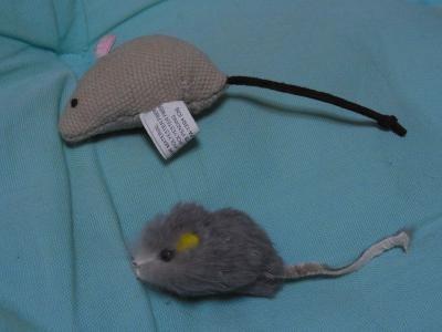 ネズミ1縮小