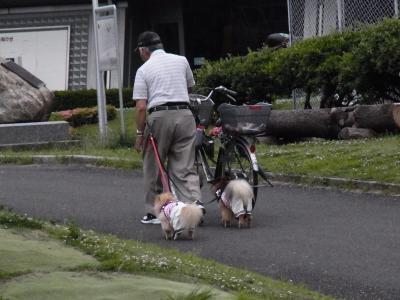 犬と猫6縮小