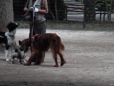 犬と猫3縮小