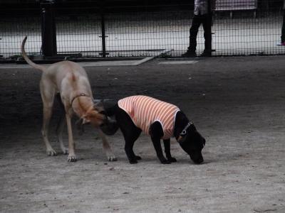 犬と猫2縮小