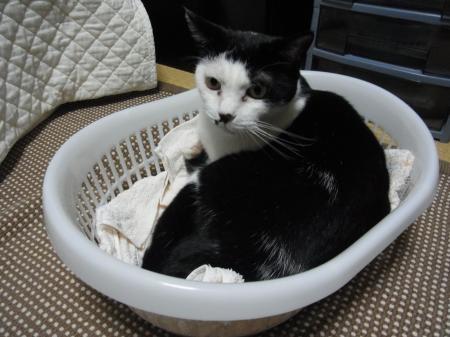かご猫2縮小