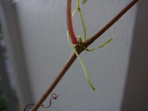 植木3縮小
