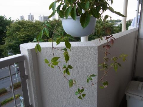 植木2縮小