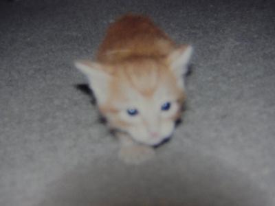 母猫6縮小