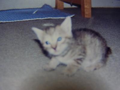 母猫4縮小
