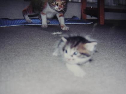 母猫5縮小