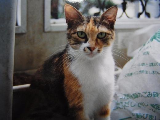 母猫1縮小