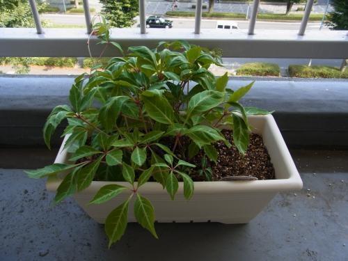 植物2縮小