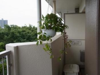 植木2最初縮小