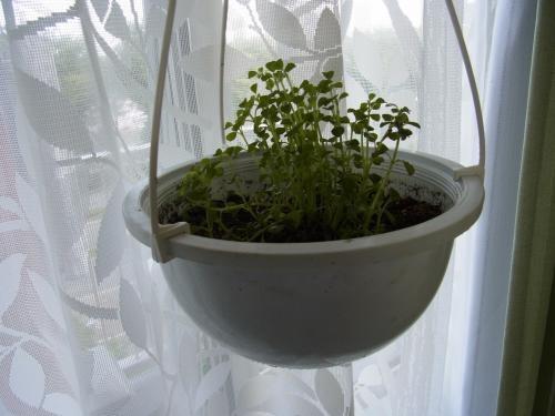 植物1縮小週くょし