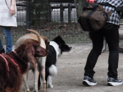 十戒犬4縮小
