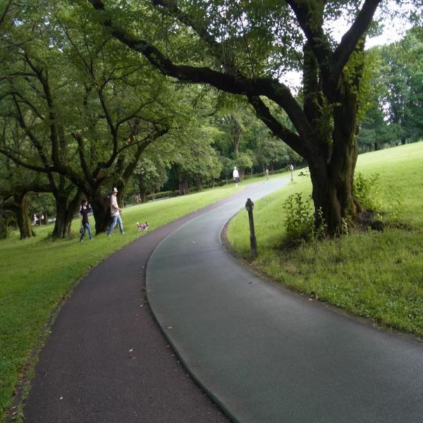 蝉公園イメージ縮小