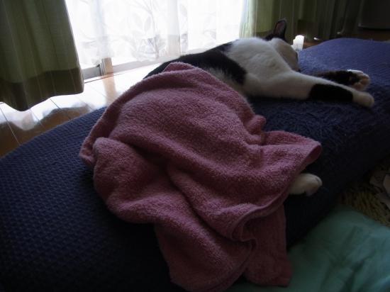 タオル昼寝縮小