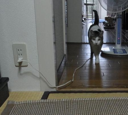 ひめ歩く縮小