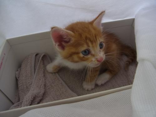 見てしまった子猫縮小