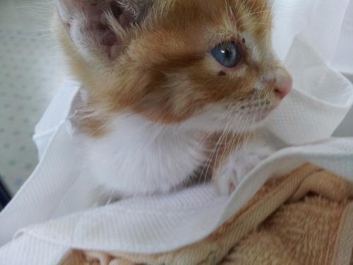 子猫9_convert_20120817170722