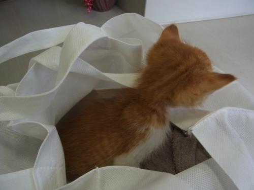 子猫6_convert_20120817170633