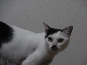 発表猫縮小7