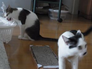 発表猫縮小6