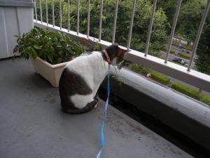 発表猫縮小2