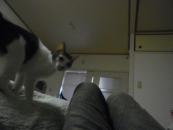 猫は飼い主縮小1