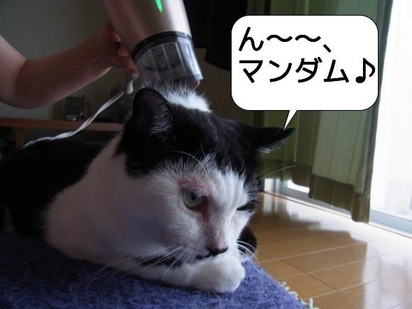 猫は見かけに吹き縮小3