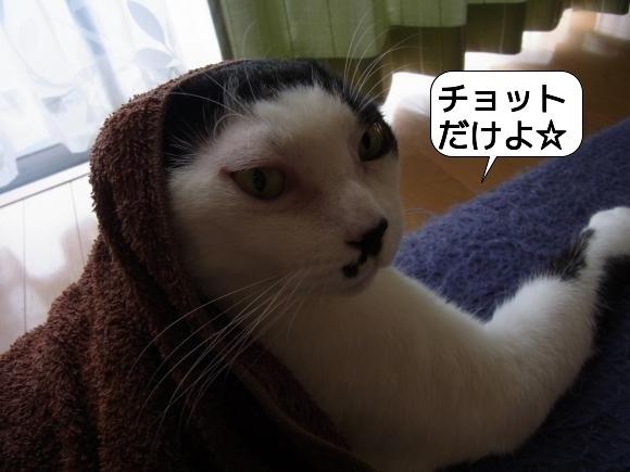 猫は見かけに吹き縮小4