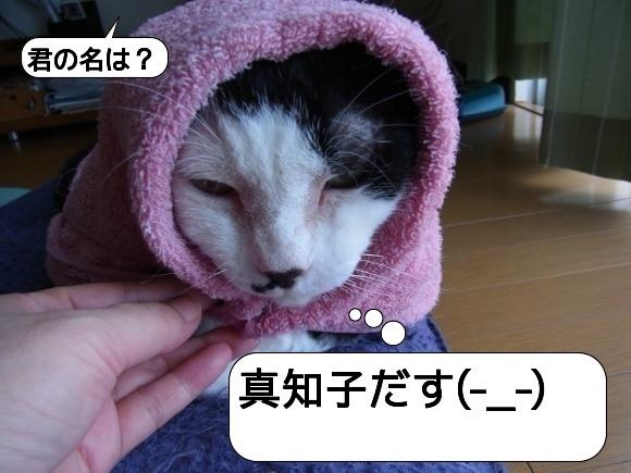 猫は見かけに吹き縮小2