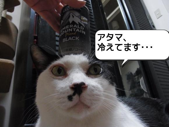 猫は見かけに吹き縮小1