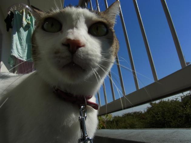 猫写真2縮小