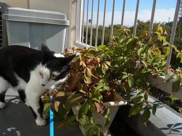 猫写真小さい秋縮小