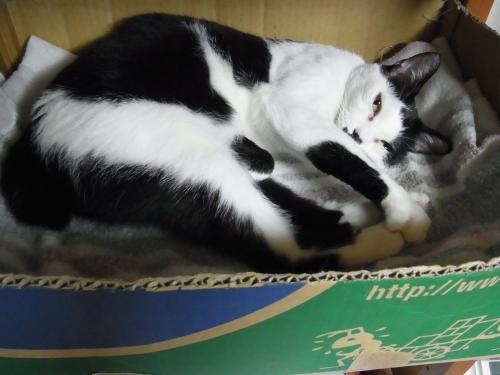 猫写真ダンボ経る縮小