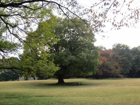 秋景色縮小2