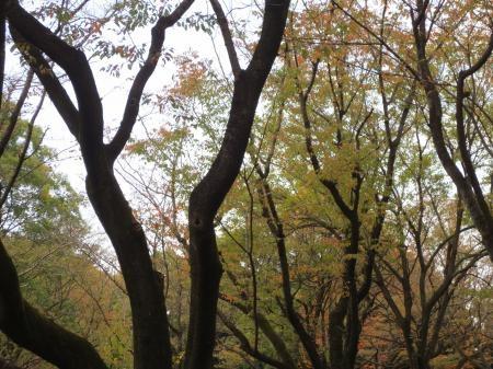 秋景色縮小1