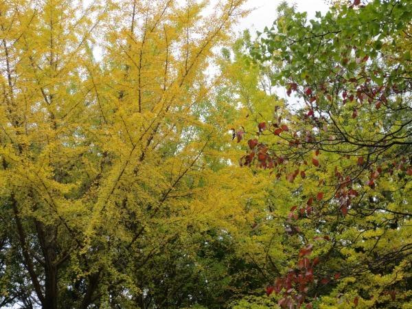 秋景色縮小3