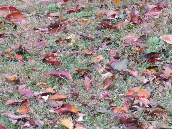 秋景色縮小4