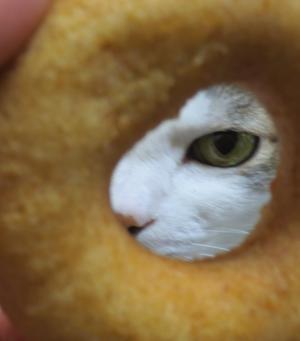 ドーナツひめ縮小2